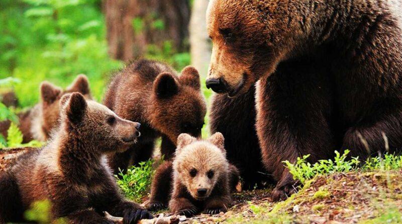 Niciun urs nu valorează mai mult ca viaţa unui om