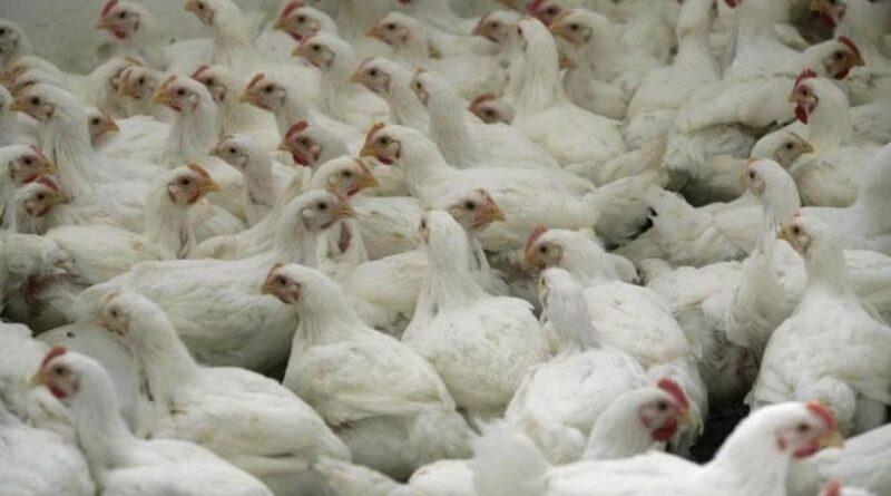 infecție cu tulpina H10N3 a gripei aviare la om